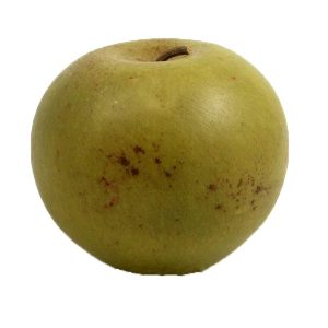 Granny Smith Apple (mela nonna smith) image