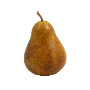 Brown Seckle Pear (pera marrone secchio) image