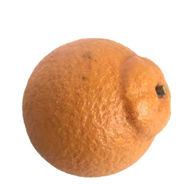 Navel Orange (arancia navelina) image